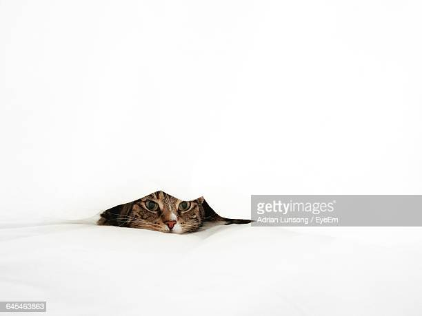 Cat Peeking On Bed Over White Background