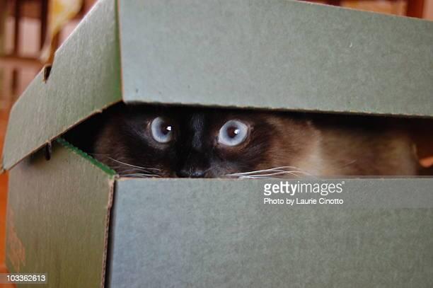Cat peeking out of box
