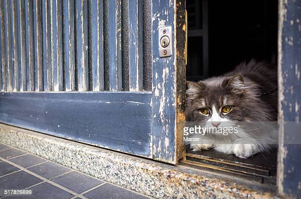 A cat peeping through the gap