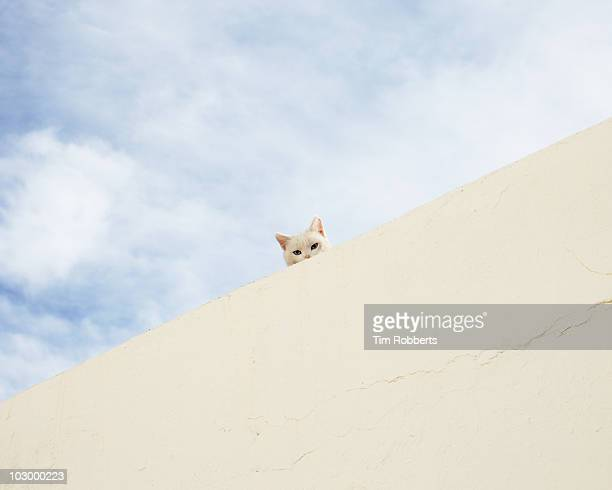 Cat peering over wall!