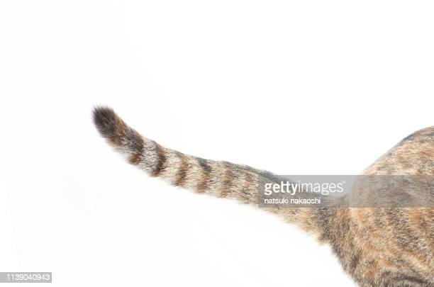 cat - tail stock pictures, royalty-free photos & images