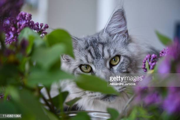 cat - hairy bush stock pictures, royalty-free photos & images