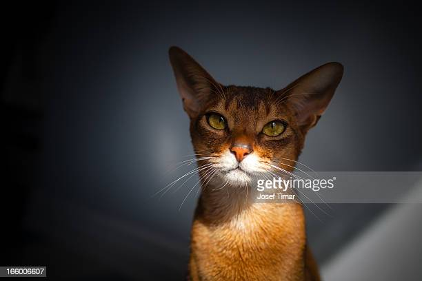 Cat ...
