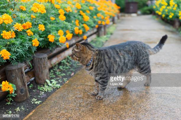 cat - liyao xie stock pictures, royalty-free photos & images