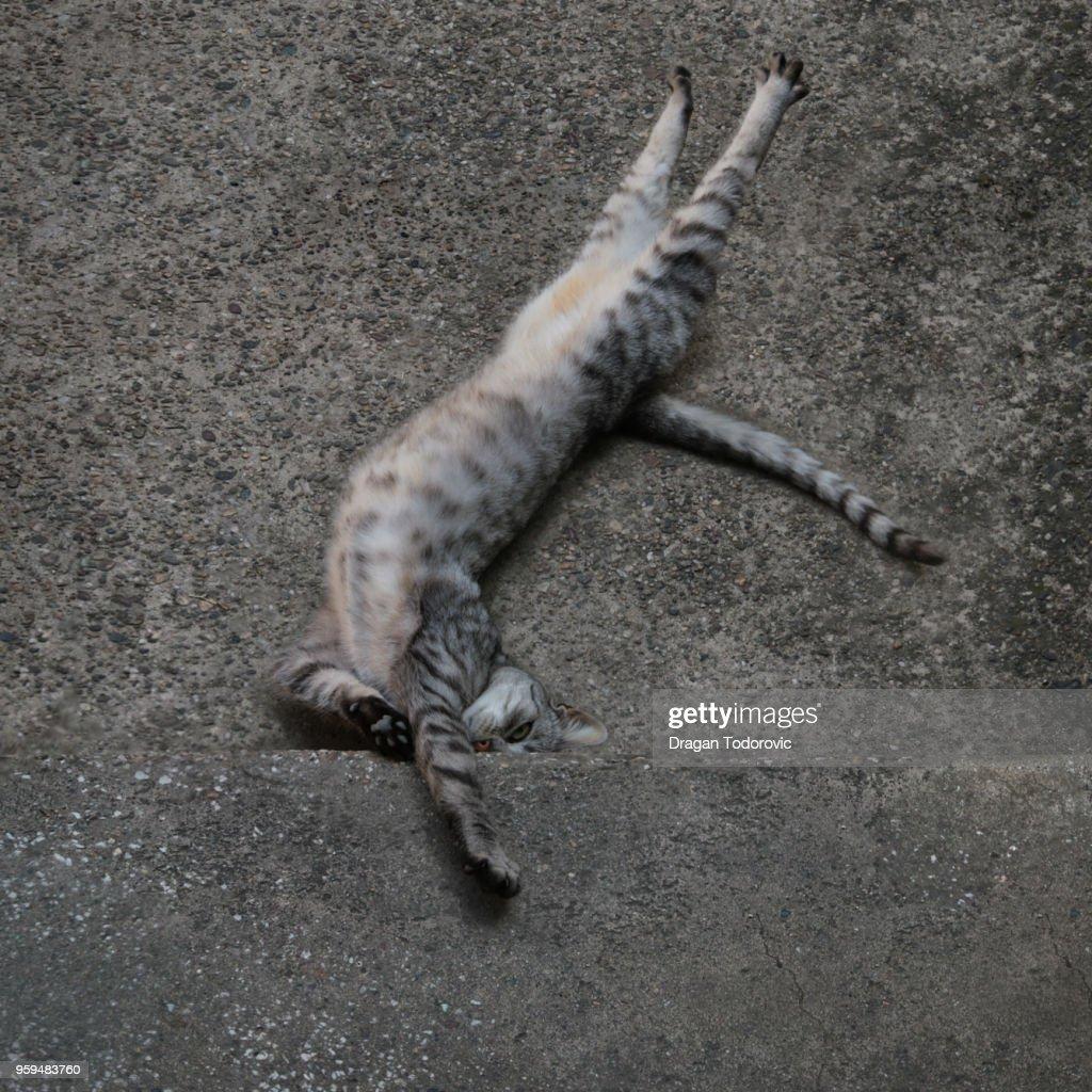 Cat : Stock-Foto