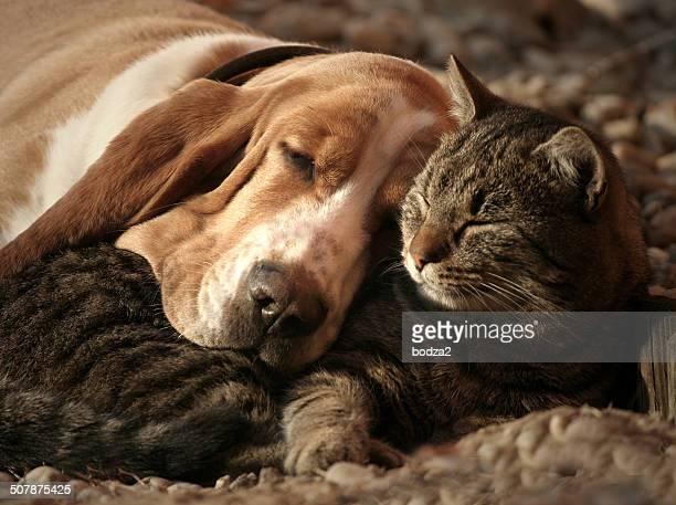 Cat pillow, dog blanket