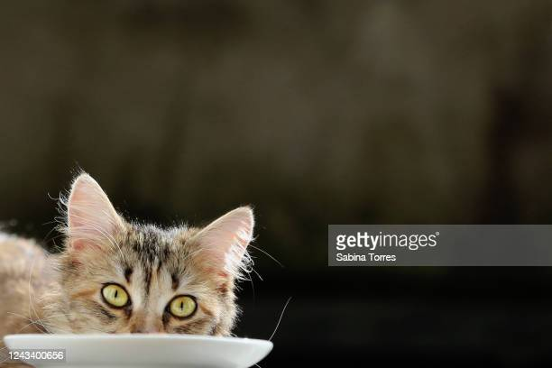 cat plate - cat family stock pictures, royalty-free photos & images