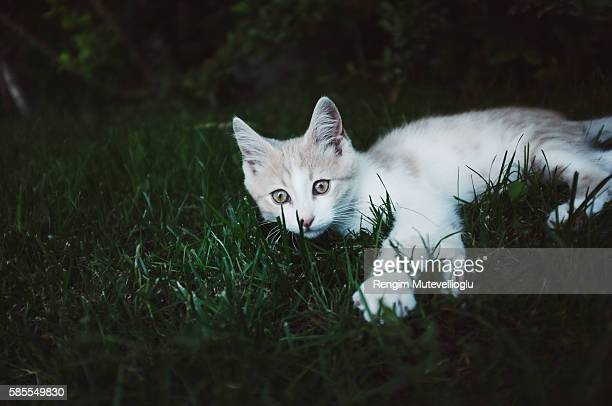 Cat playing in grass