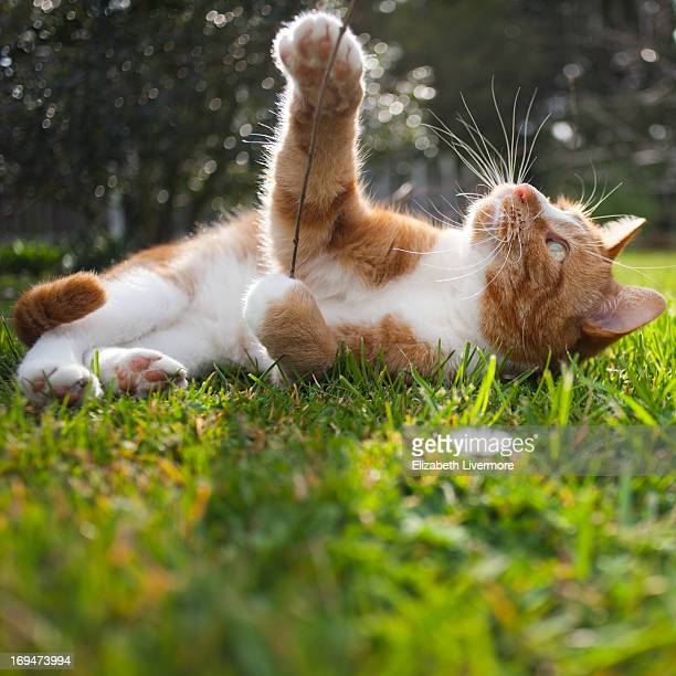 Cat playing in the sunshine