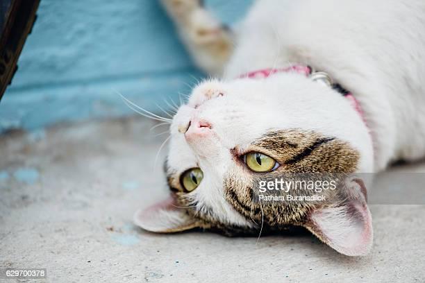 Cat playing itself