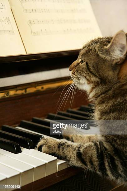 cat playing piano - grand piano stock photos and pictures