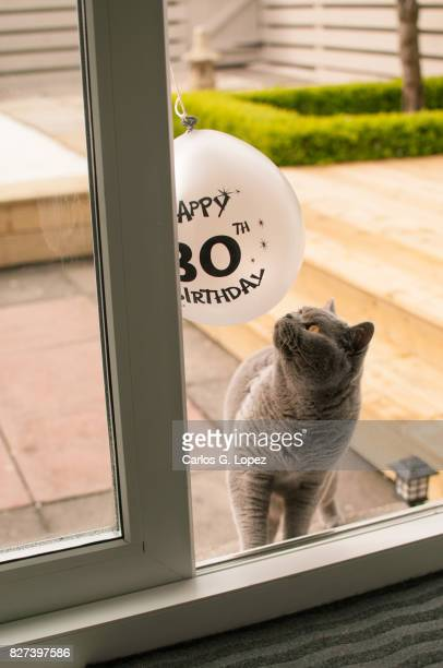 Cat playing with 30th birthday balloon