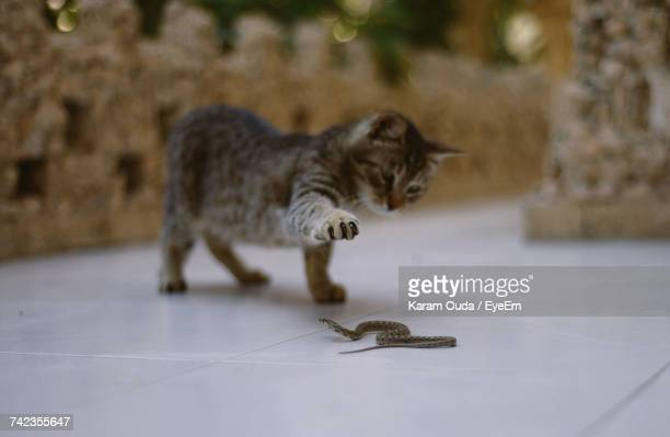 Cat Playing With A Small Snake