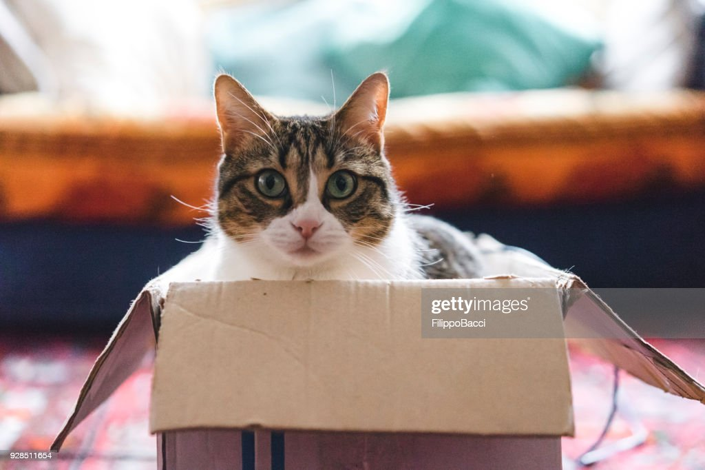 Cat playing with boxes and toys : Stock Photo
