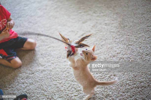 cat playing with cat toy - cat's toy stock pictures, royalty-free photos & images