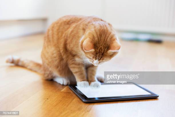 Cat playing with digital tablet
