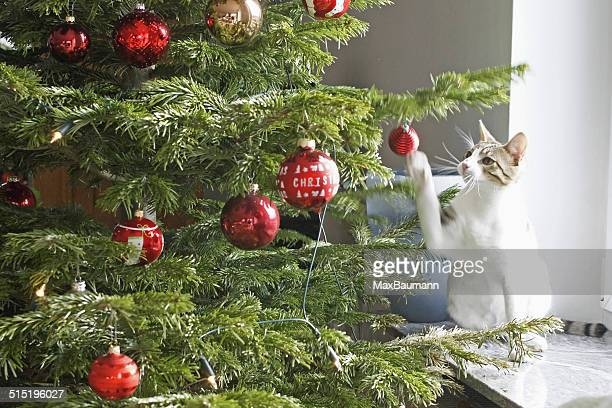 A white cat playing with christmas ornaments.