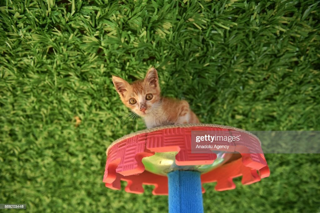 A cat plays at the 'Miyav Park' (or 'Meow Park'in English) in Mersin, Turkey on October 30, 2017. Mersin Metropolitan Municipality has build a park with security cams to provide shelter, food, playground including veterinary service for stray and feral cats.