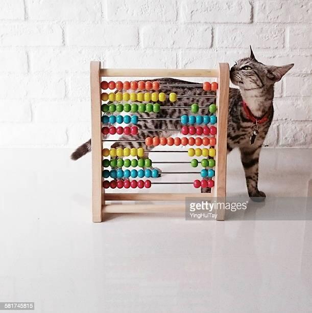cat plying with a colorful abacus - abaco imagens e fotografias de stock