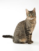 Cat portrait on white background