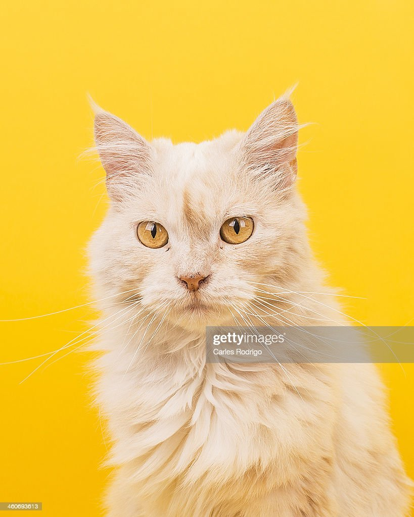 Cat portrait : Stock Photo