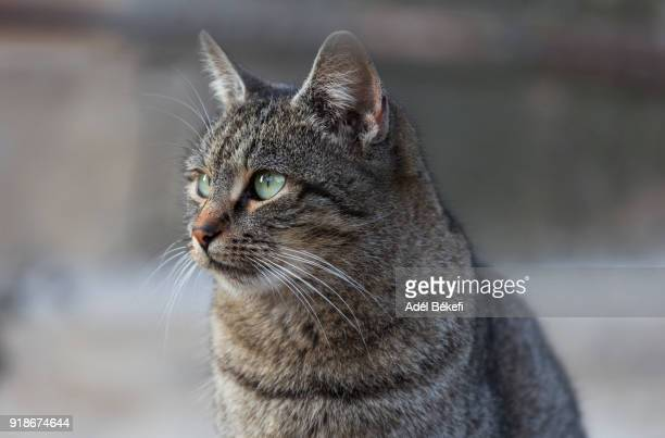 cat portrait - domestic animals stock pictures, royalty-free photos & images