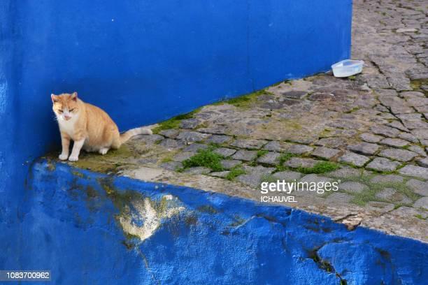 cat portrait portugal - monchique stock pictures, royalty-free photos & images