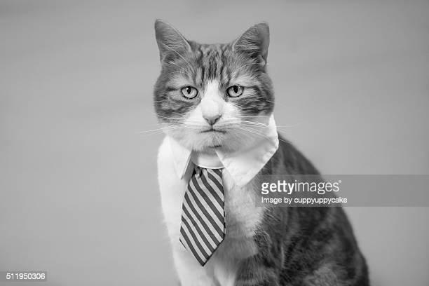 Cat Professional