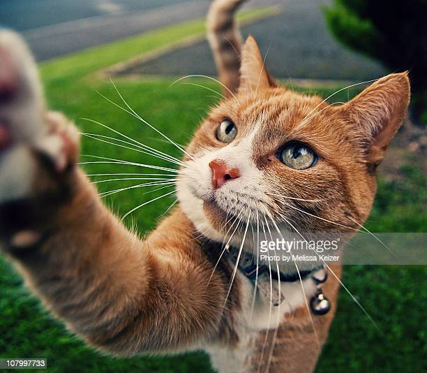 Cat reaching out to grab you
