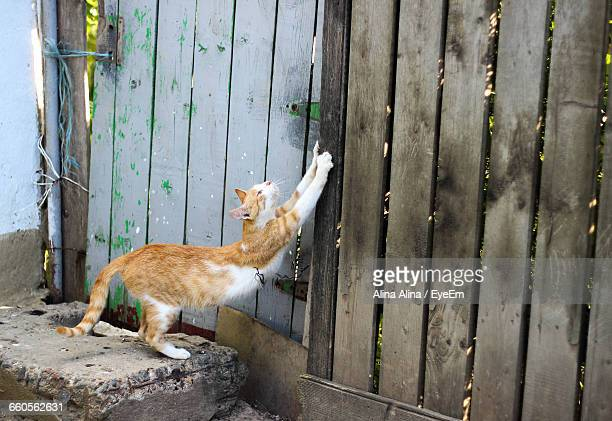 Cat Reaching Over Fence