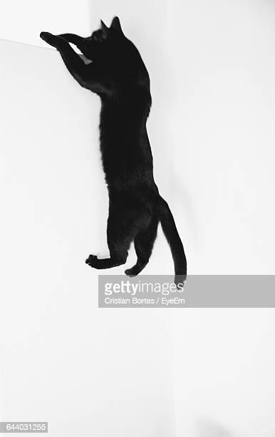 Cat Rearing Up By White Wall
