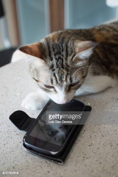 Cat reflected in smartphone