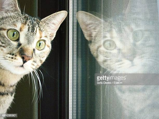 Cat Reflecting On Glass Window At Home