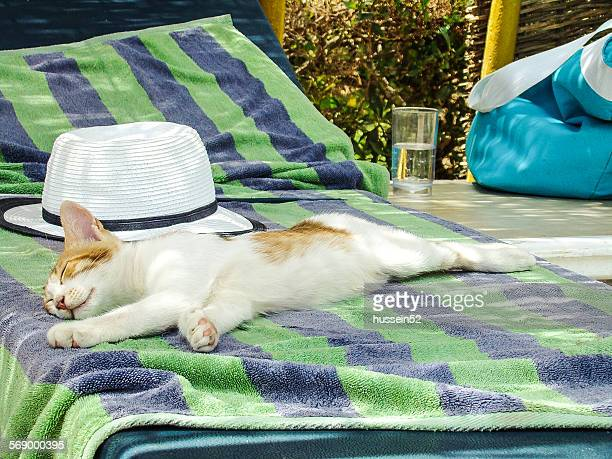 cat relax - hussein52 stock photos and pictures