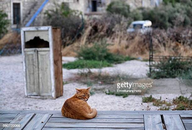 cat relaxing at sunset - emreturanphoto stock pictures, royalty-free photos & images