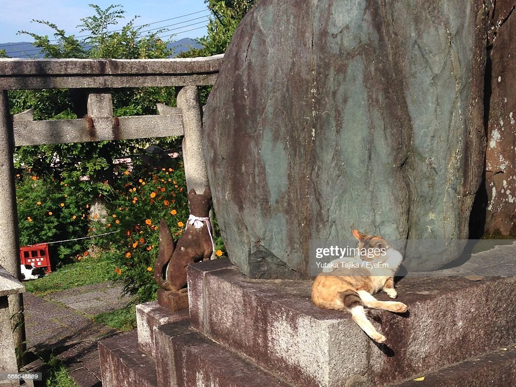 Cat Relaxing By Sculpture : Stock Photo
