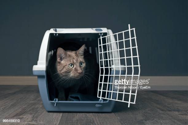 Cat Relaxing In Cage On Floorboard
