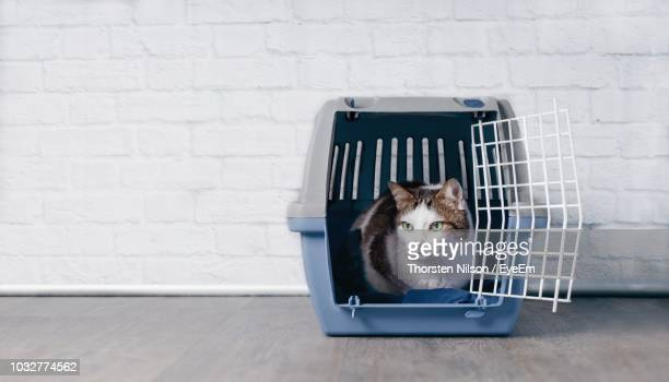 Cat Relaxing In Container Against Wall