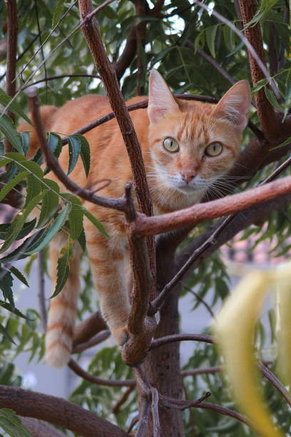 Cat relaxing in small tree, Fortaleza, Ciara, Brazil, Ceara