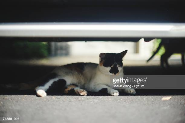 Cat Relaxing On Road Under Car