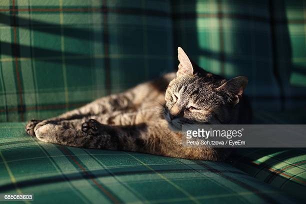 cat relaxing on sofa at home - at home ストックフォトと画像