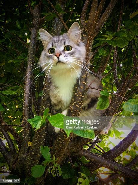 Cat Relaxing On Tree