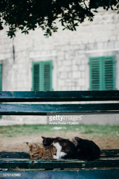 cat relaxing on window of building - aneta eyeem stock pictures, royalty-free photos & images