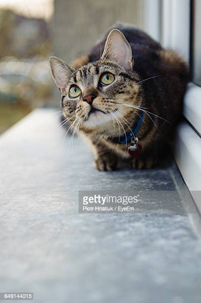 cat relaxing on window sill - piotr hnatiuk stock pictures, royalty-free photos & images