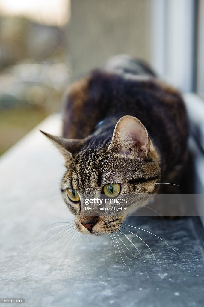 Cat Relaxing On Window Sill : Stock Photo