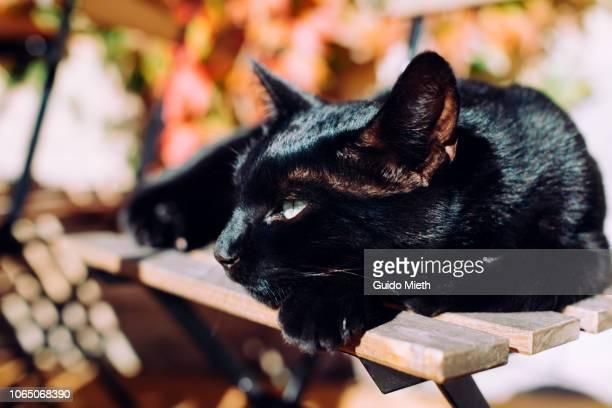 Cat relaxing outdoor.