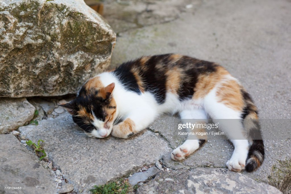 Cat Relaxing Outdoors : Photo
