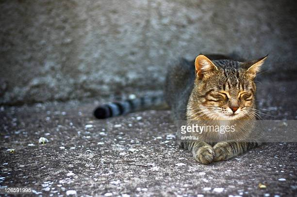 cat relaxing under sun - annfrau stock pictures, royalty-free photos & images