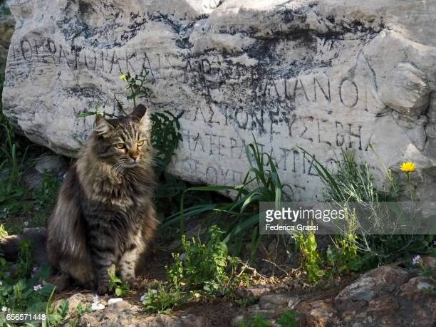 Cat Resting By An Ancient Greek Inscription On A Marble Block