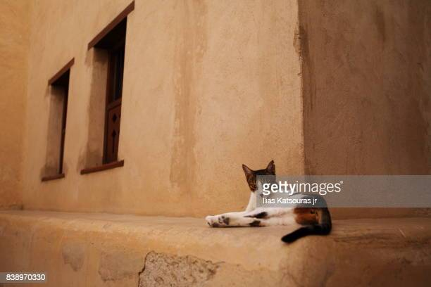 A cat resting in front of sandstone wall in Nizwa castle